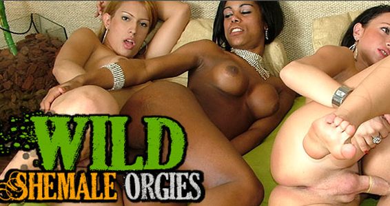 Popular shemale porn site for orgy videos